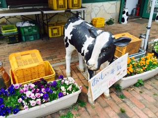 LATTE-cow